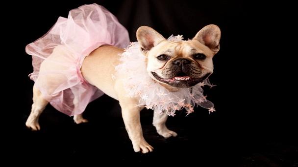 America's Cutest Pet