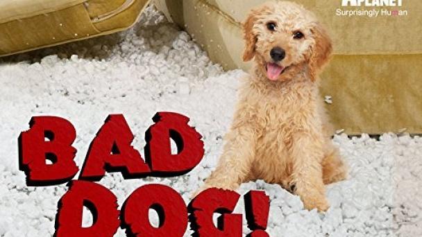 Bad Dog!