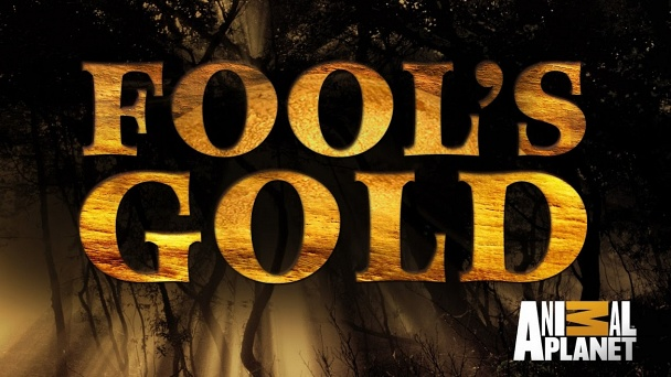 Fool's Gold