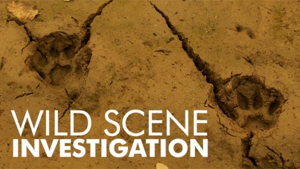 Wild Scene Investigation