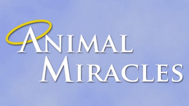 Animal Miracles