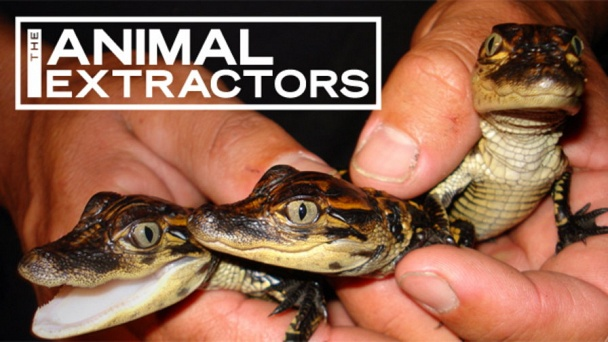 The Animal Extractors