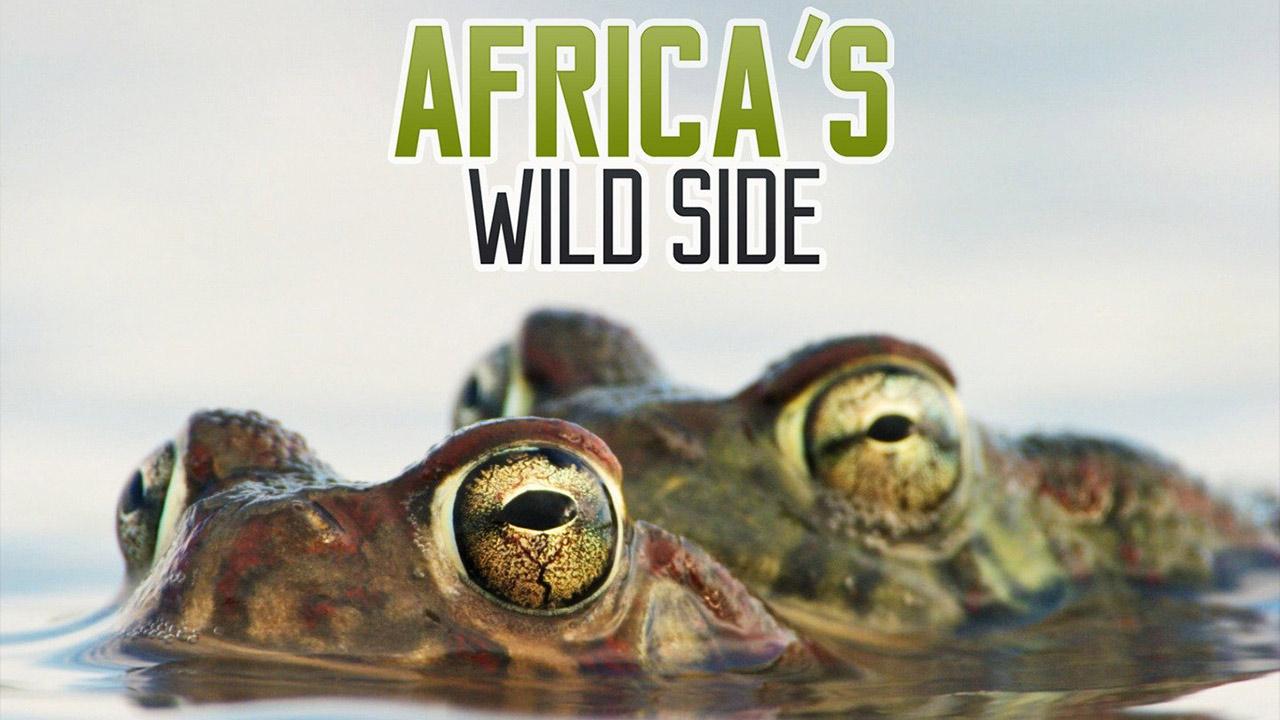 Africa's Wild Side
